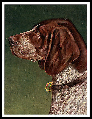 German Shorthaired Pointer Old Type Head Study Vintage Style Dog Print Poster