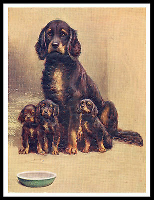 Gordon Setter Mother And Puppies Great Vintage Style Dog Print Poster