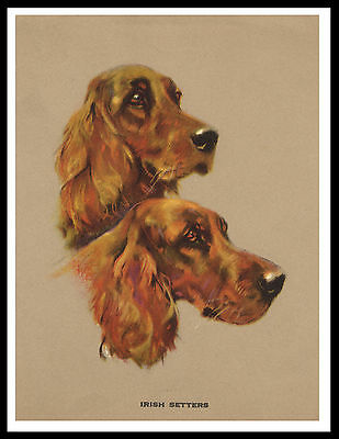 Irish Setter Head Study Two Dogs Great Vintage Style Dog Print Poster