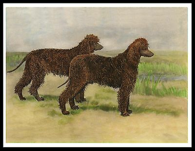 Irish Water Spaniel Two Dogs Great Vintage Style Dog Print Poster