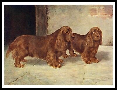 Sussex Spaniel Two Dogs Great Vintage Style Dog Print Poster