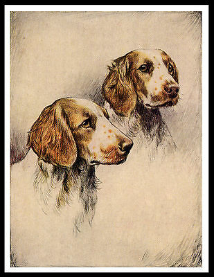 Welsh Springer Spaniel Old Type Dogs Heads Great Vintage Style Dog Print Poster