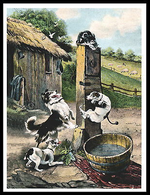 Border Collie And Fox Terriers Chase Cat Great Vintage Style Dog Print Poster