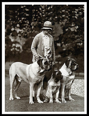 Mastiff Lady And Her Dogs Great Vintage Style Dog Print Poster