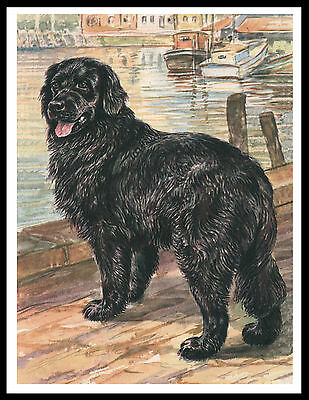 Newfoundland Dog Standing On Jetty Great Vintage Style Dog Print Poster
