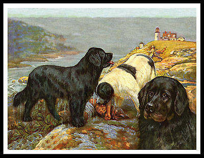 Newfoundland Dogs And Saved Boy Great Vintage Style Dog Print Poster