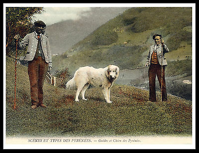Great Pyrenees Pyrenean Mountain Dogs And Guides Vintage Style Dog Print Poster