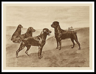 Rottweiler Dog Group Great Vintage Style Sepia Dog Art Print Poster