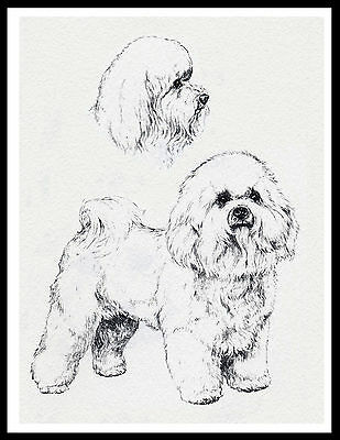 Bichon Frise Lovely Image Dog Sketch Print Poster