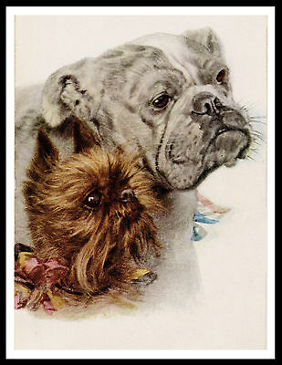 Brussels Griffon And Bulldog Lovely Vintage Style Dog Print Poster