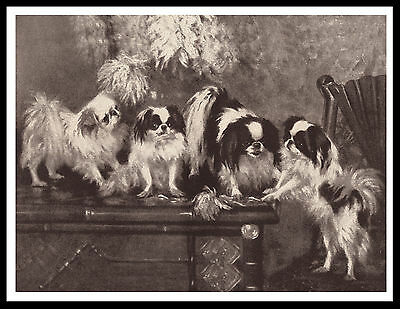 Japanese Chin Dog Group Lovely Vintage Style Sepia Dog Art Print Poster