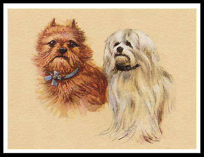 Maltese And Brussels Griffon Dogs Charming Vintage Style Dog Print Poster
