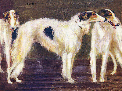 Borzoi Charming Dog Greetings Note Card Beautiful Group Of Three Dogs