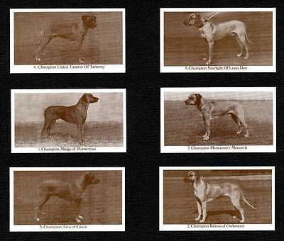 Rhodesian Ridgeback Dogs Of Yesteryear Set Of 6 Named Dog Photo Trade Cards