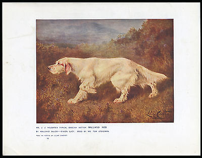 English Setter Named Dog Old Antique 1907 Dog Art Print By Lillian Cheviot