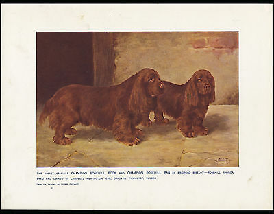 Sussex Spaniel Named Champion Dogs Antique 1907 Dog Art Print By Lillian Cheviot