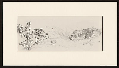 Old English Sheepdog Pup Stalks Hens And Geese Vernon Stokes Dog Print Mounted