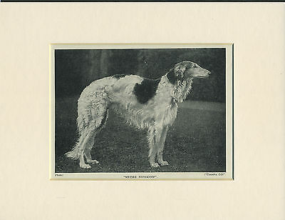 BORZOI OLD 1930's NAMED DOG PRINT MOUNTED READY TO FRAME