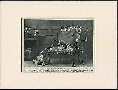 PEKINGESE AND COCKER SPANIEL OLD 1930's DOG PRINT MOUNTED READY TO FRAME