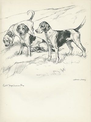FELL FOXHOUNDS LOVELY OLD 1938 DOG ART PRINT by VERNON STOKES