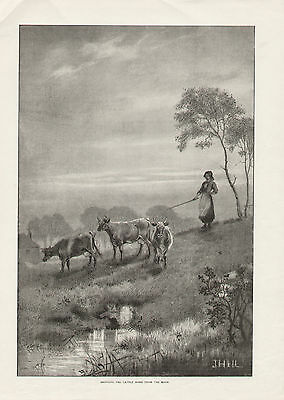 Bringing Cattle Home From The Moors Rural Scene 1896 Antique Engraving Print