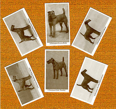 Irish Terrier Named Set Of 6 Dog Photo Trade Cards