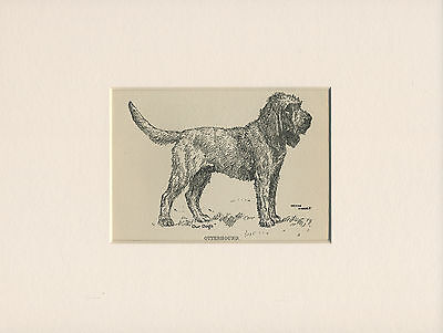 OTTERHOUND LOVELY ANTIQUE DOG PRINT FROM 1912 by WARDLE READY MOUNTED