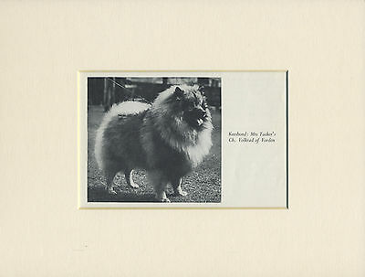 Keeshond Old 1940's Named Champion Dog Print Mounted Ready To Frame