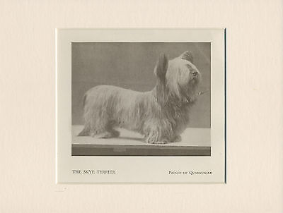 Skye Terrier Named Dog Old 1934 Print Mounted Ready To Frame