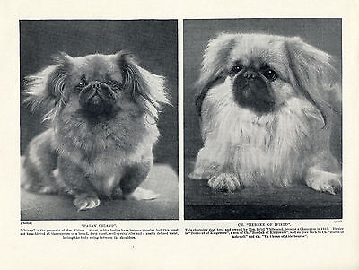 Pekingese Two Little Named Dogs Original Head Study 1934 Dog Print