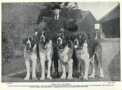 Saint Bernard Group Of Named Dogs And Their Owner Old Original 1934 Dog Print