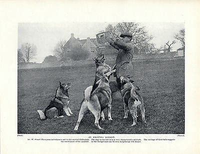 Norwegian Elkhound Named Owner And Dogs Old Original Dog Print Page From 1934