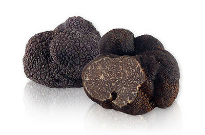 10 g BLACK TRUFFLE Seeds Tuber melanosporum Mushroom Mycelium Spawn + Free eBook