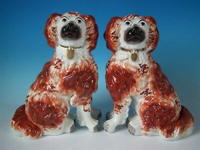 Pair Staffordshire Chunky spaniels with free front legs