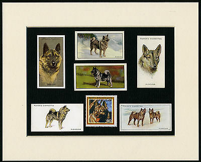 Norwegian Elkhound Mounted Set Of Vintage Dog Collectable Cards And Stamps