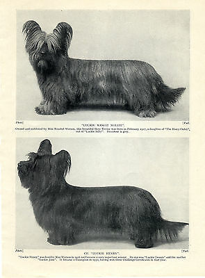 Skye Terrier Two Named Dogs One A Champion Old 1934 Dog Print