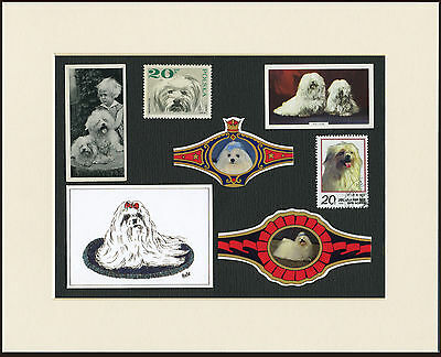Maltese Mounted Set Of Vintage Dog Collectable Cards Bands And Stamps Great Gift