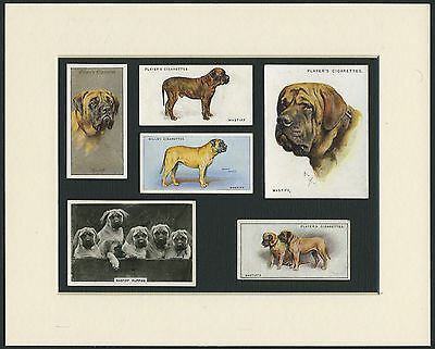 Mastiff Mounted Set Of Vintage Dog Collectable Cigarette Cards Great Gift