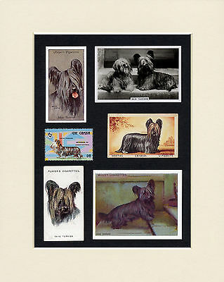 Skye Terrier Mounted Set Of Vintage Dog Collectable Cards And Stamps