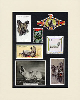 Skye Terrier Mounted Set Of Vintage Dog Collectable Cards Bands And Stamps