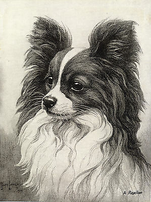 Papillon Lovely Sepia Head Study Old 1930's Nina Scott Langley Dog Art Print