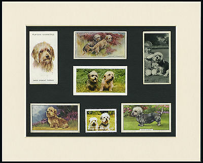 Dandie Dinmont Terrier Mounted Set Of Vintage Dog Collectable Cards And Stamps