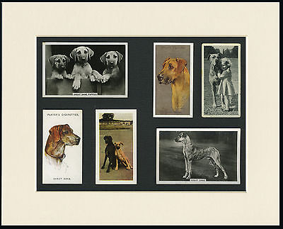 Great Dane Mounted Set Of Vintage Dog Collectable Cards Great Gift