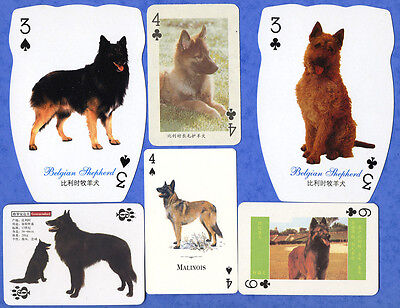 Belgian Shepherd Selection Dog Playing Swap Single Cards Great Gift When framed