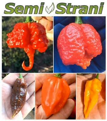 50 PURE SEEDS of the 5 WORLDs HOTTEST TASTY CHILI PEPPERs Coll. 5 BIS: REAPER et