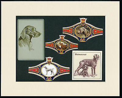 Weimaraner Mounted Set Of Vintage Dog Collectable Cards And Bands