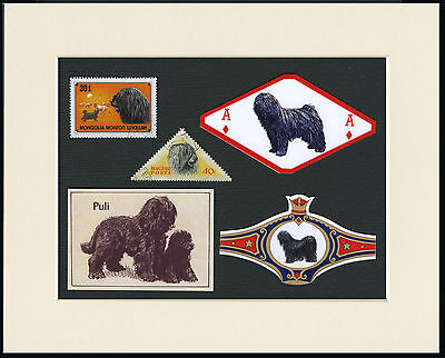 Hugarian Puli Mounted Set Of Vintage Dog Collectable Cards Bands And Stamps