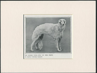 Borzoi Old 1912 Antique Named Champion Dog Print Mounted Ready To Frame