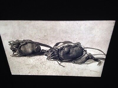 "Edward Curtis ""Buffalo Stones"" Piegan Native American photography 35mm slide"