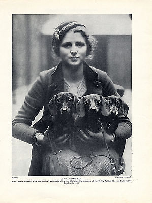 Dachshund Miniature Dogs & Lady Owner At Dog Show Old Original 1934 Print Page